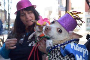 Mardi Gras celebration Mardi Paws pet parade